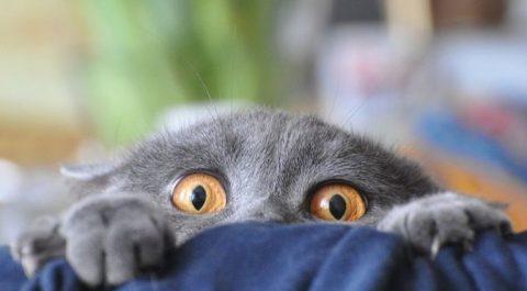 «Господи, как же мне страшно!!!»