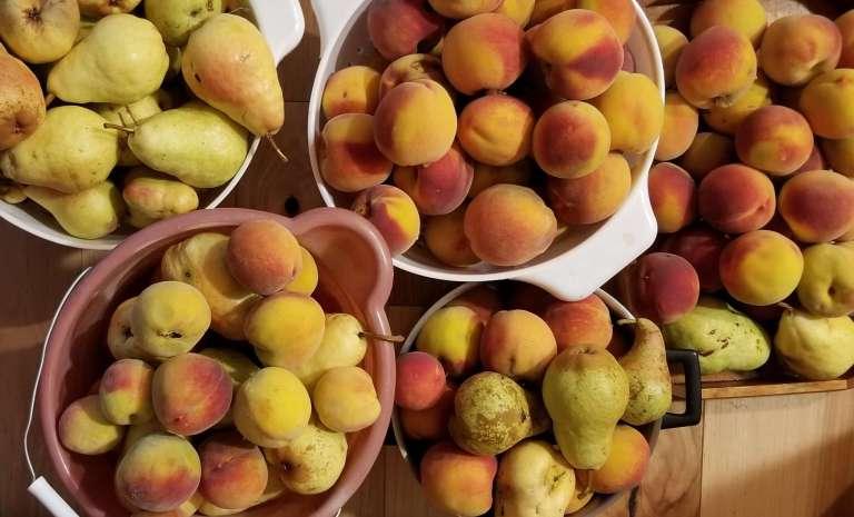 изобилие персиков