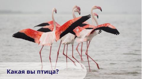 Какая вы птица?