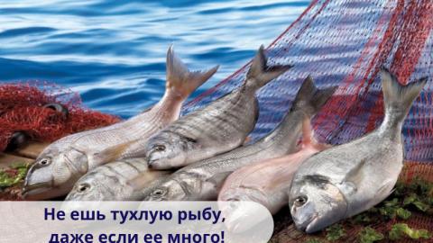 Не ешь тухлую рыбу, даже если ее много!